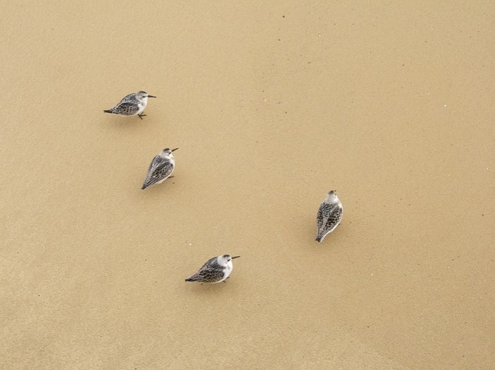 beach_birds-large